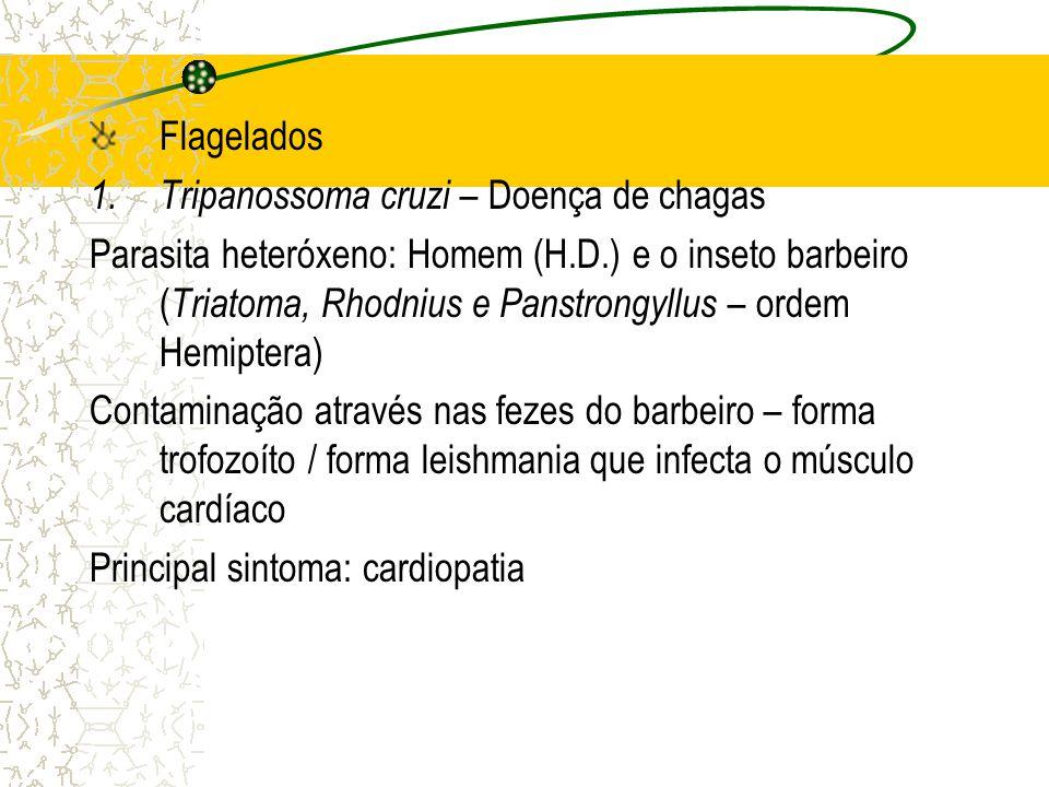 Flagelados Tripanossoma cruzi – Doença de chagas.