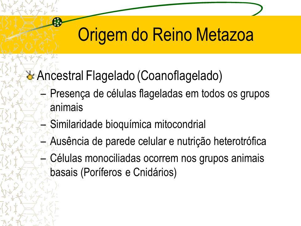 Origem do Reino Metazoa