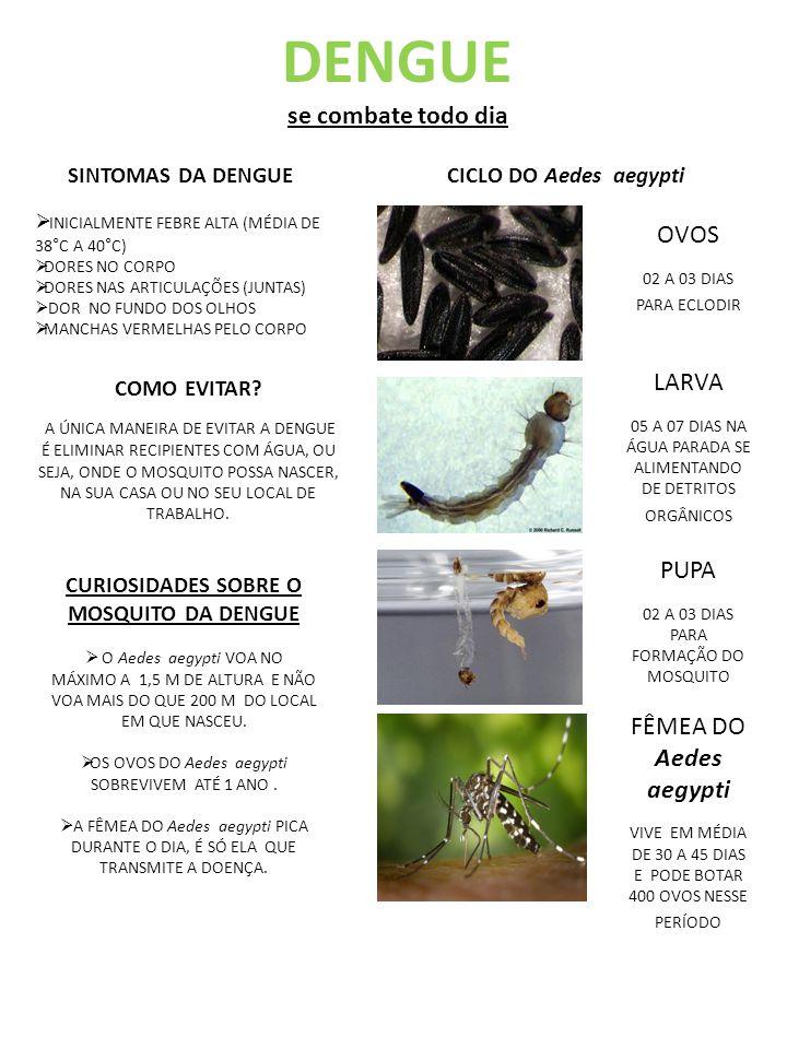 CURIOSIDADES SOBRE O MOSQUITO DA DENGUE