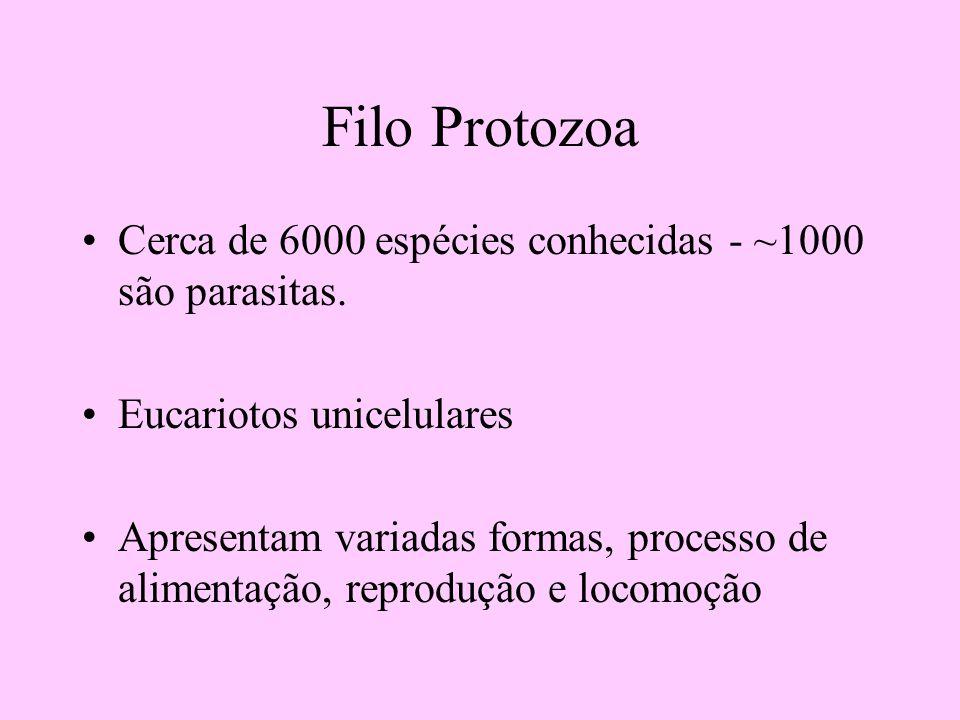 Filo Protozoa Cerca de 6000 espécies conhecidas - ~1000 são parasitas.