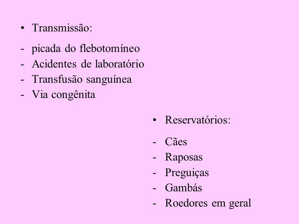 Transmissão: picada do flebotomíneo. Acidentes de laboratório. Transfusão sanguínea. Via congênita.