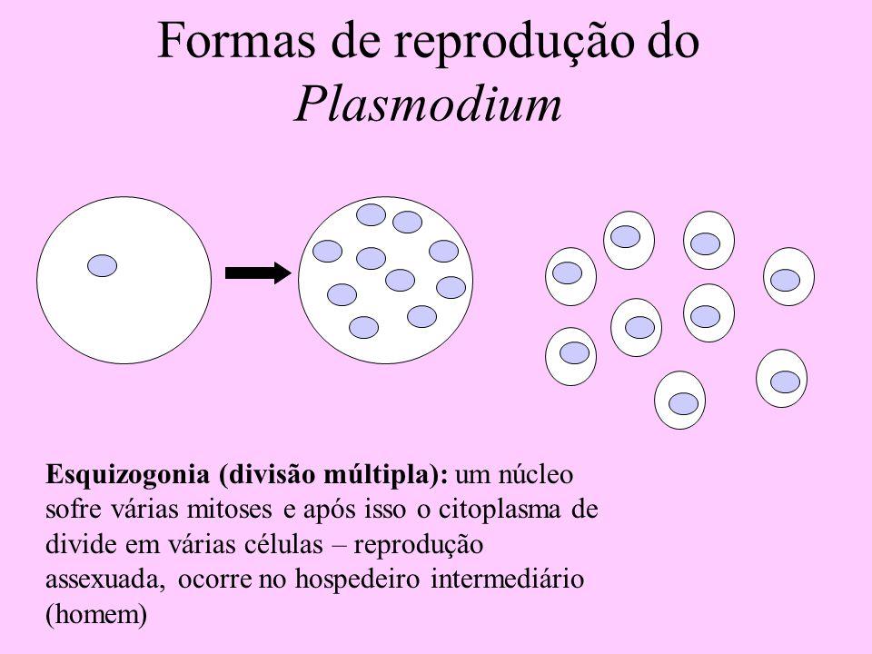 Formas de reprodução do Plasmodium