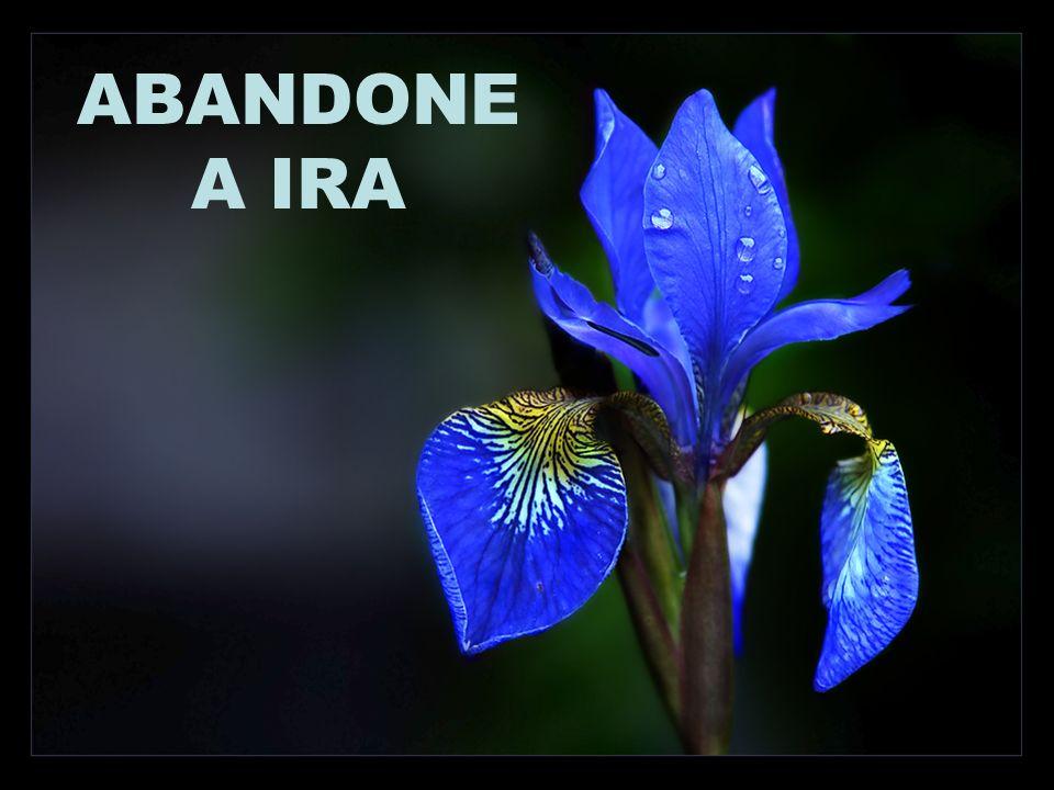 ABANDONE A IRA