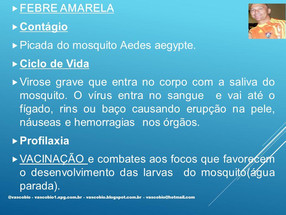 Picada do mosquito Aedes aegypte. Ciclo de Vida