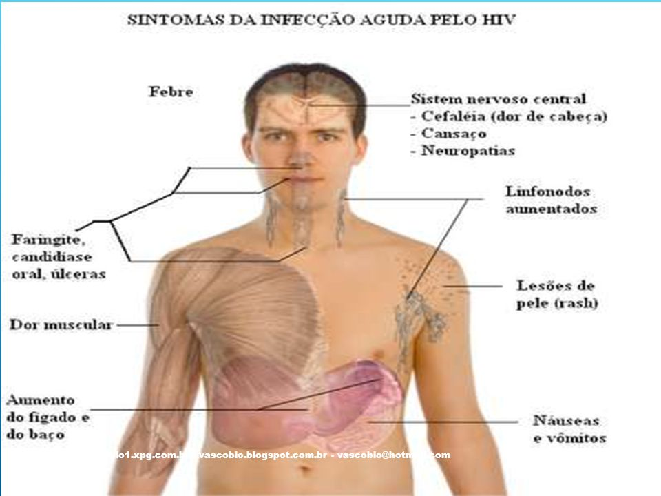 @vascobio - vascobio1. xpg. com. br - vascobio. blogspot. com