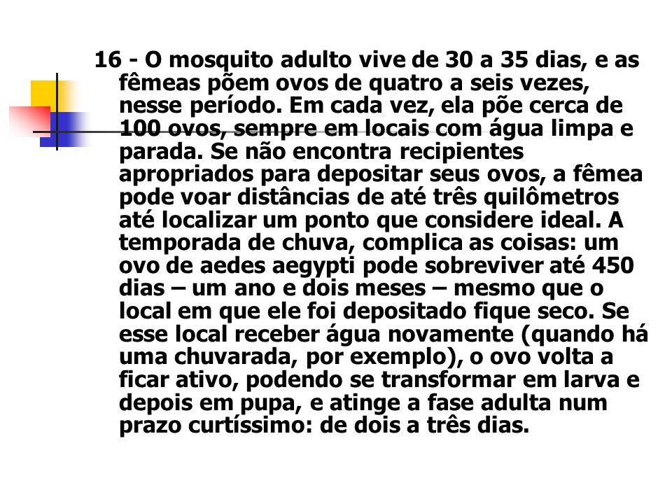 16 - O mosquito adulto vive de 30 a 35 dias, e as fêmeas põem ovos de quatro a seis vezes, nesse período.