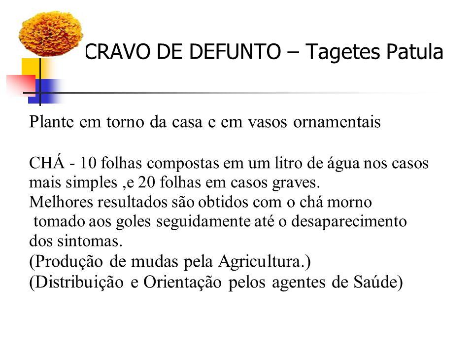 CRAVO DE DEFUNTO – Tagetes Patula