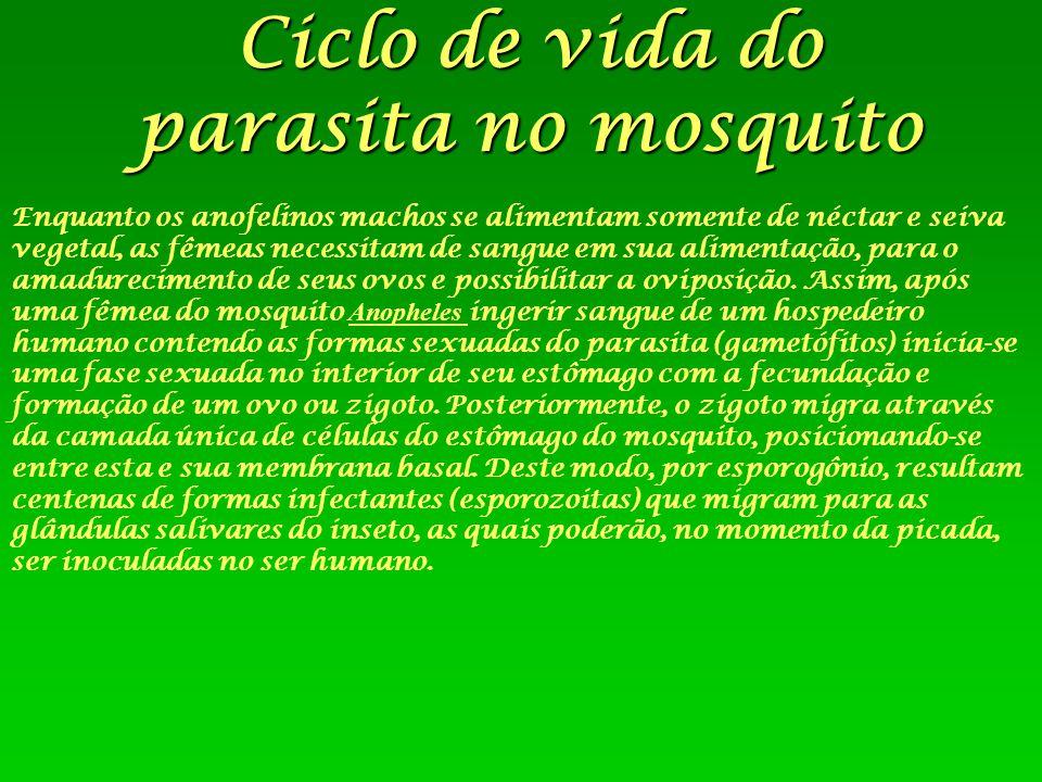 Ciclo de vida do parasita no mosquito