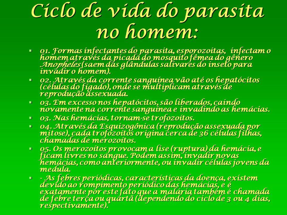 Ciclo de vida do parasita no homem: