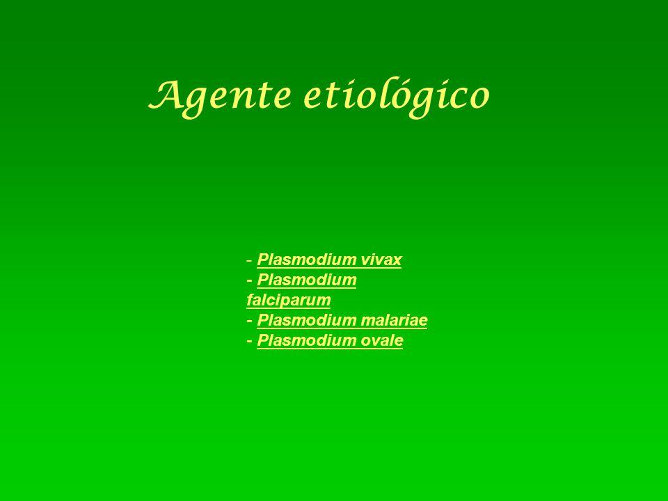 Agente etiológico - Plasmodium vivax - Plasmodium falciparum - Plasmodium malariae - Plasmodium ovale.