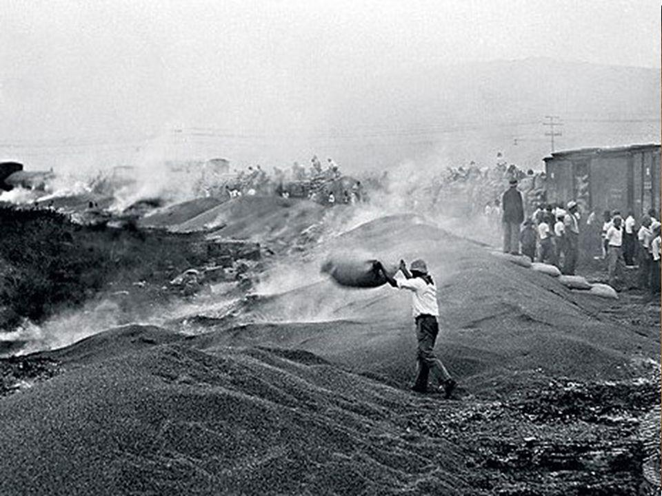 Economia e sociedade Agricultura: proibição de novos plantios de café e queima do excedente.