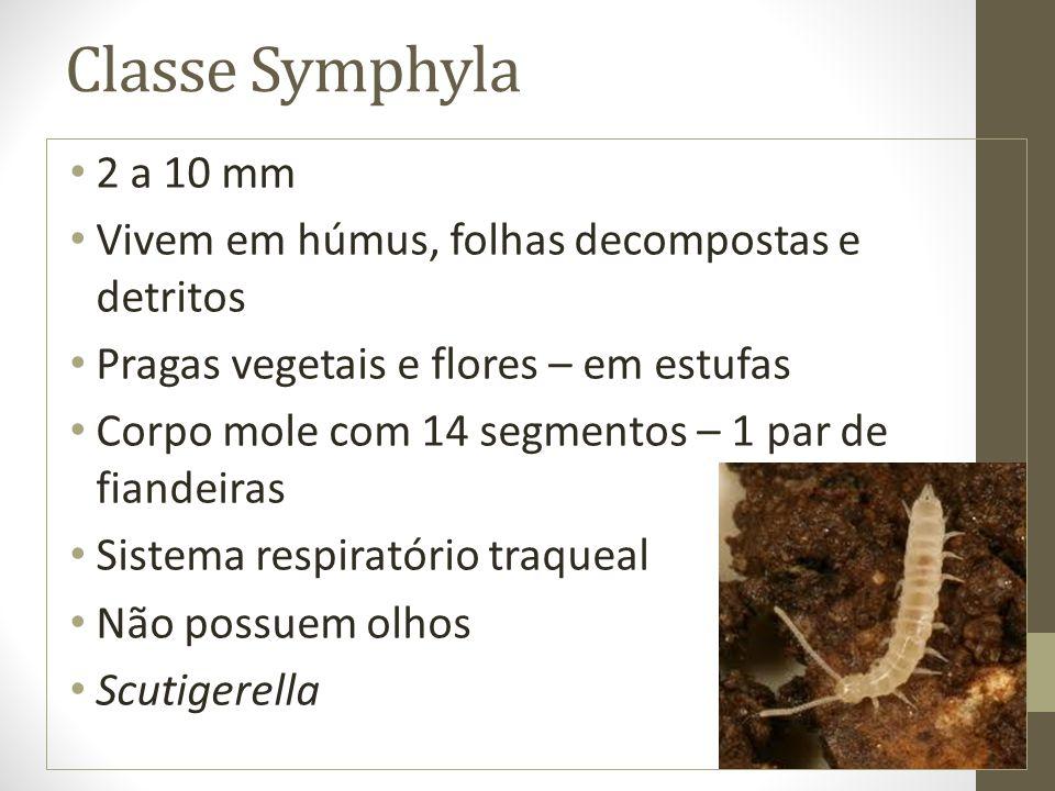 Classe Symphyla 2 a 10 mm. Vivem em húmus, folhas decompostas e detritos. Pragas vegetais e flores – em estufas.