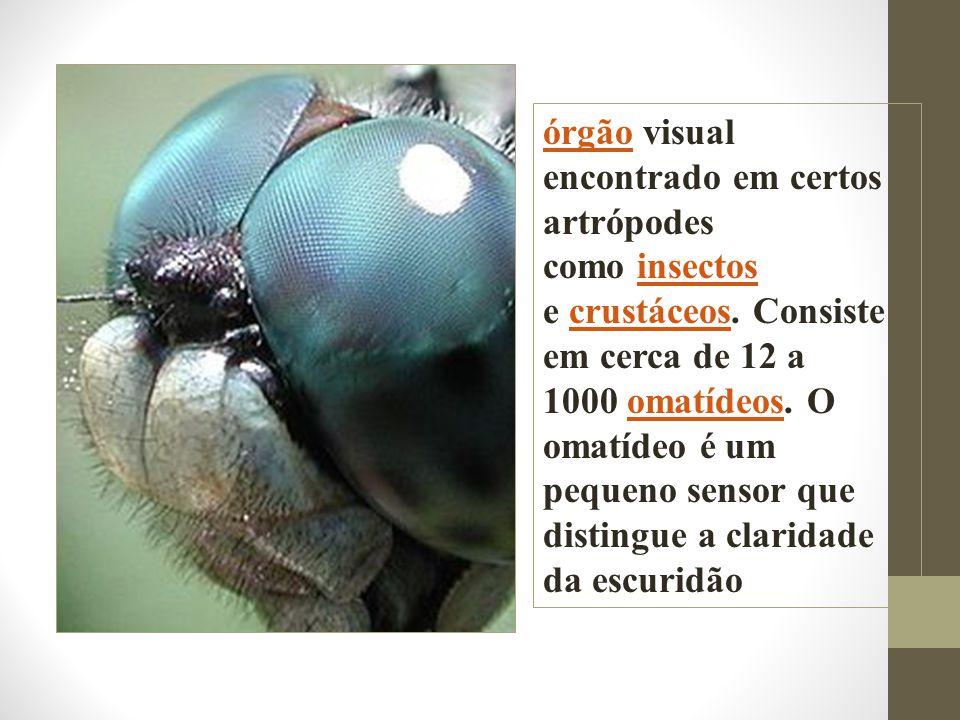 órgão visual encontrado em certos artrópodes como insectos e crustáceos.