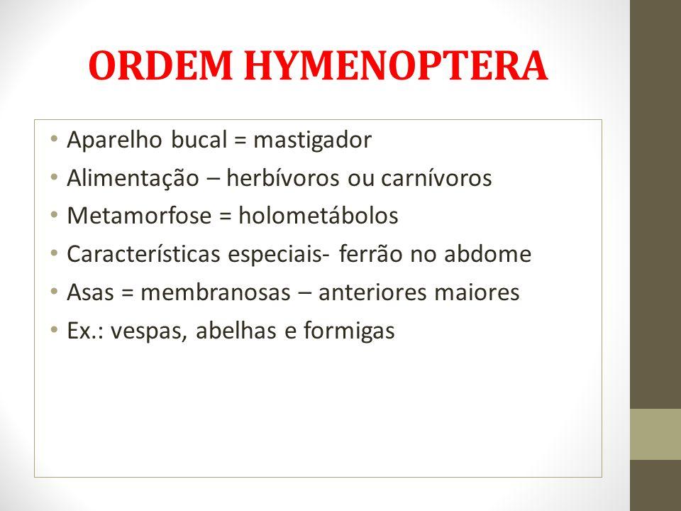 ORDEM HYMENOPTERA Aparelho bucal = mastigador