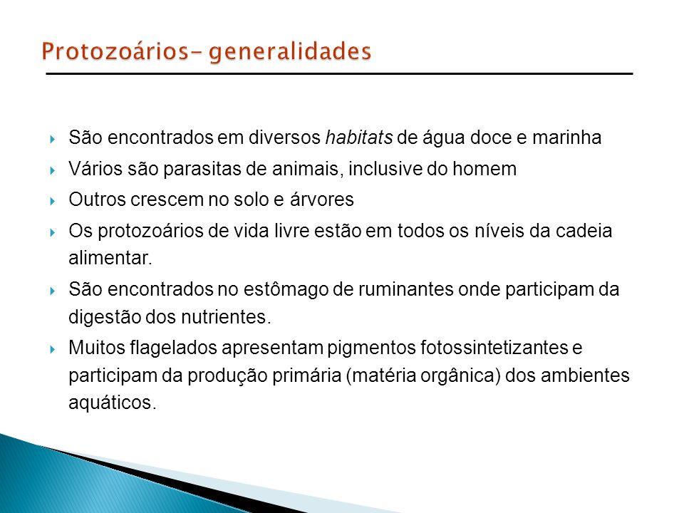 Protozoários- generalidades
