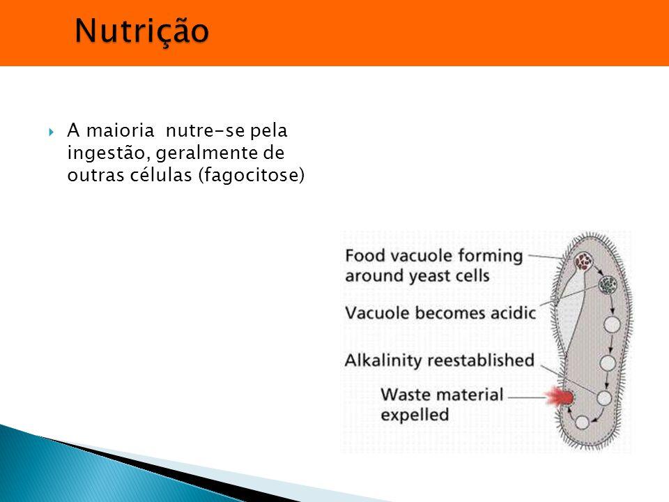 Nutrição A maioria nutre-se pela ingestão, geralmente de outras células (fagocitose)