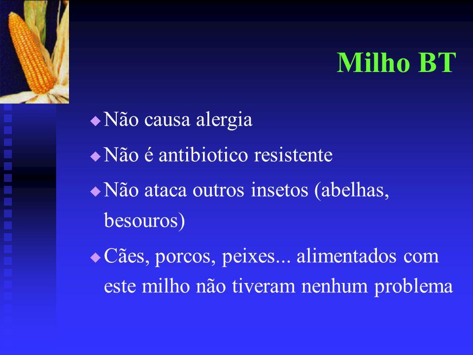 Milho BT Não causa alergia Não é antibiotico resistente