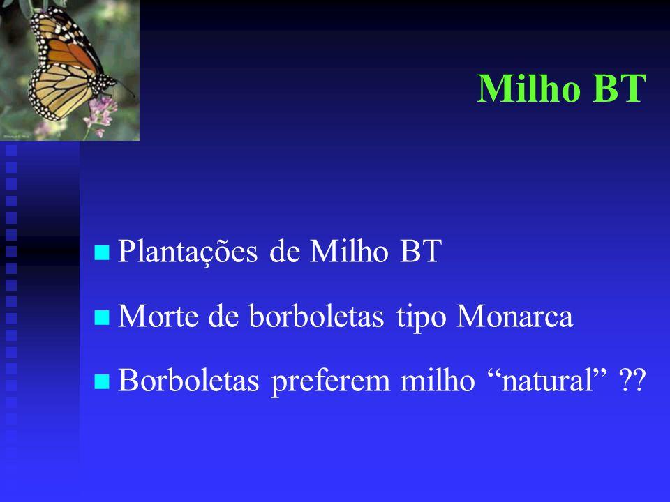 Milho BT Plantações de Milho BT Morte de borboletas tipo Monarca