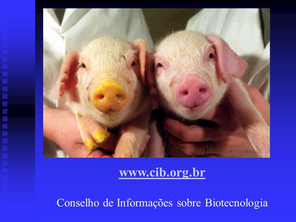 Conselho de Informações sobre Biotecnologia