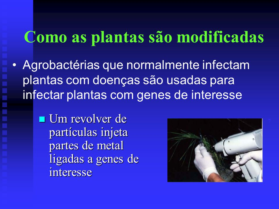 Como as plantas são modificadas