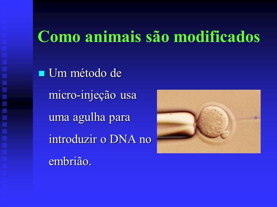Como animais são modificados