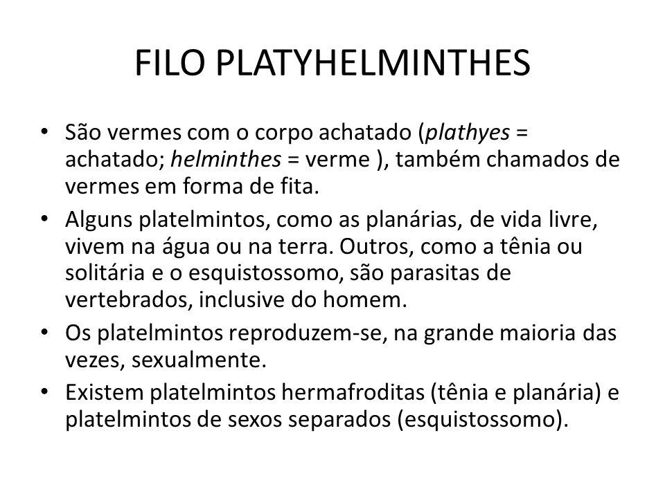 FILO PLATYHELMINTHES São vermes com o corpo achatado (plathyes = achatado; helminthes = verme ), também chamados de vermes em forma de fita.