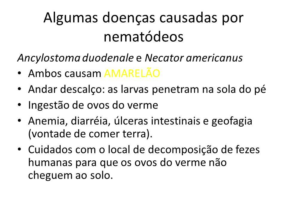 Algumas doenças causadas por nematódeos