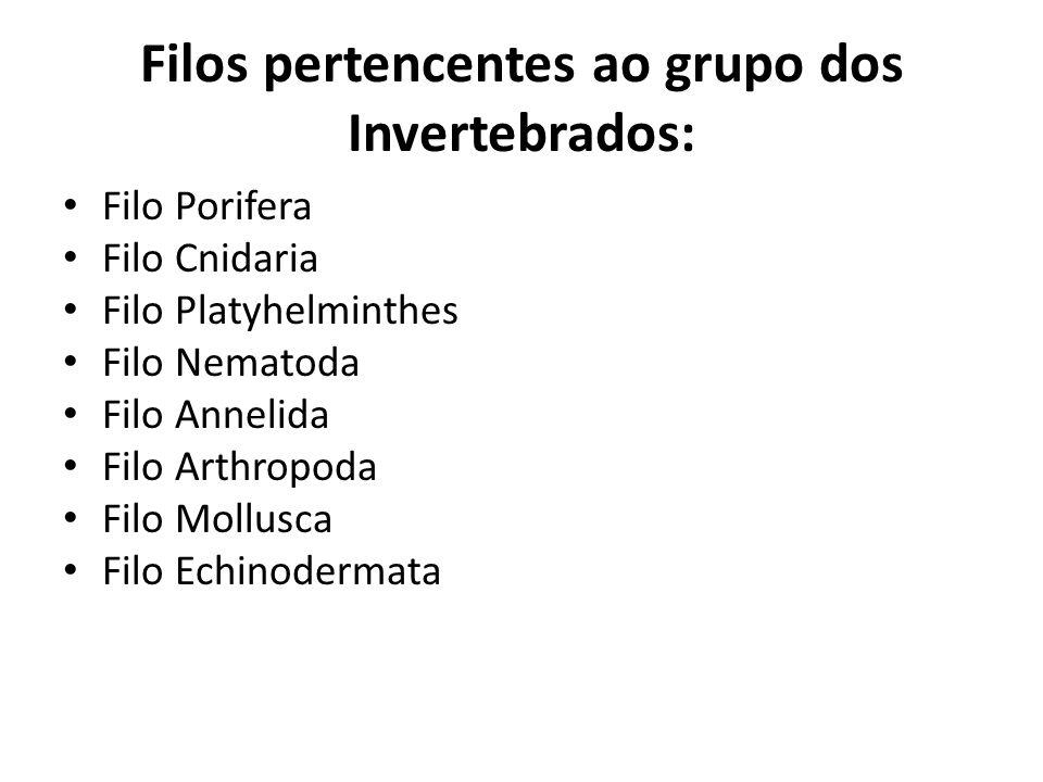 Filos pertencentes ao grupo dos Invertebrados: