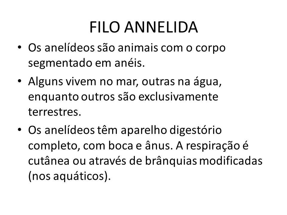 FILO ANNELIDA Os anelídeos são animais com o corpo segmentado em anéis.
