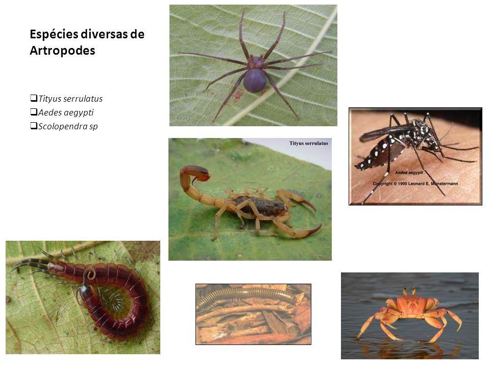 Espécies diversas de Artropodes