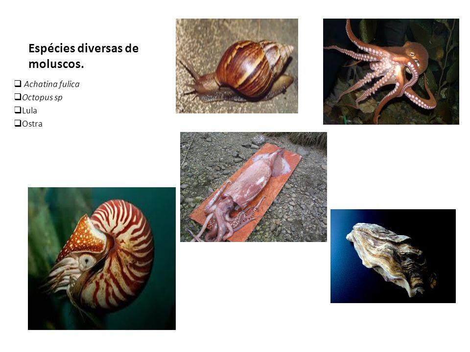 Espécies diversas de moluscos.