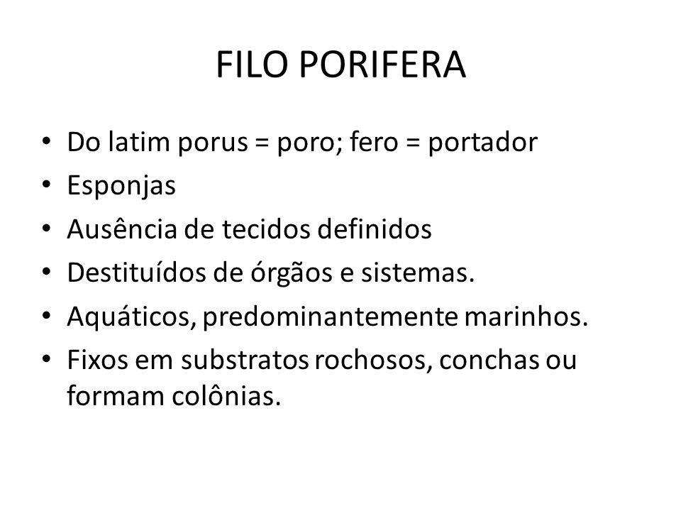 FILO PORIFERA Do latim porus = poro; fero = portador Esponjas
