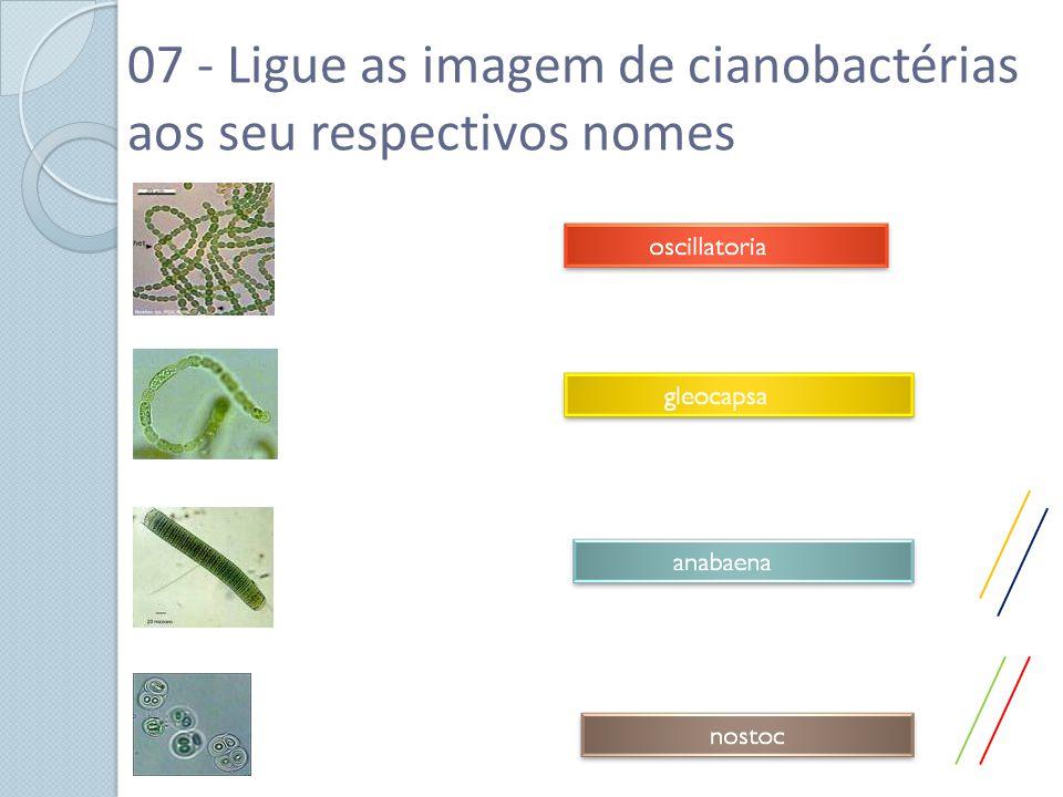 07 - Ligue as imagem de cianobactérias aos seu respectivos nomes