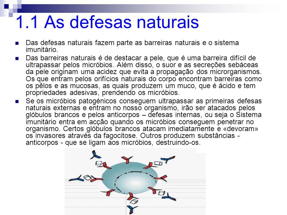 1.1 As defesas naturais Das defesas naturais fazem parte as barreiras naturais e o sistema imunitário.