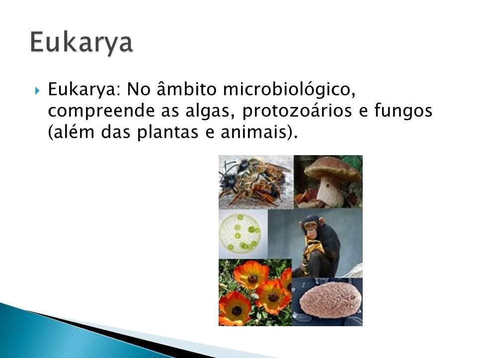 Eukarya Eukarya: No âmbito microbiológico, compreende as algas, protozoários e fungos (além das plantas e animais).