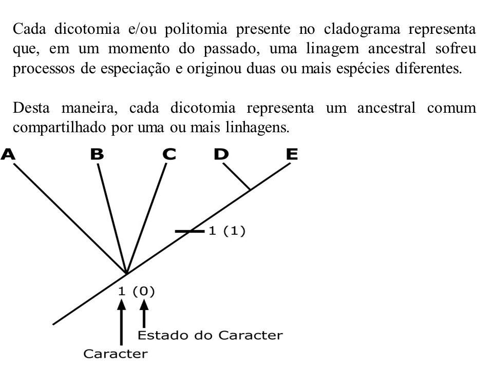 Cada dicotomia e/ou politomia presente no cladograma representa que, em um momento do passado, uma linagem ancestral sofreu processos de especiação e originou duas ou mais espécies diferentes.