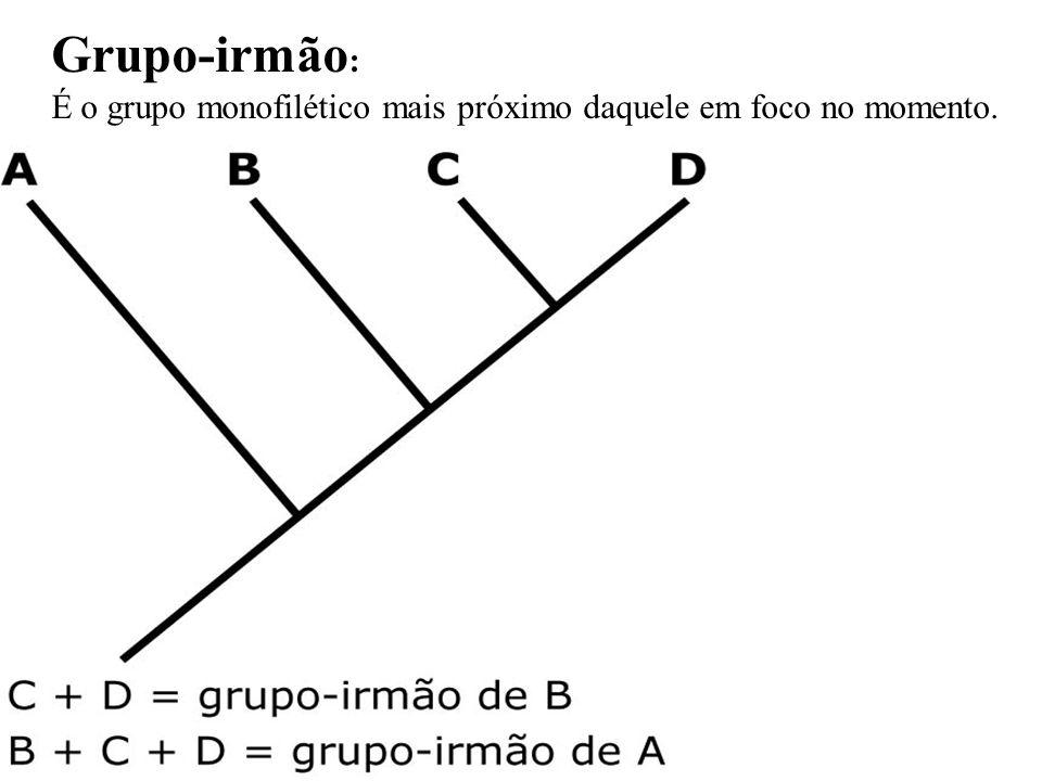 Grupo-irmão: É o grupo monofilético mais próximo daquele em foco no momento.