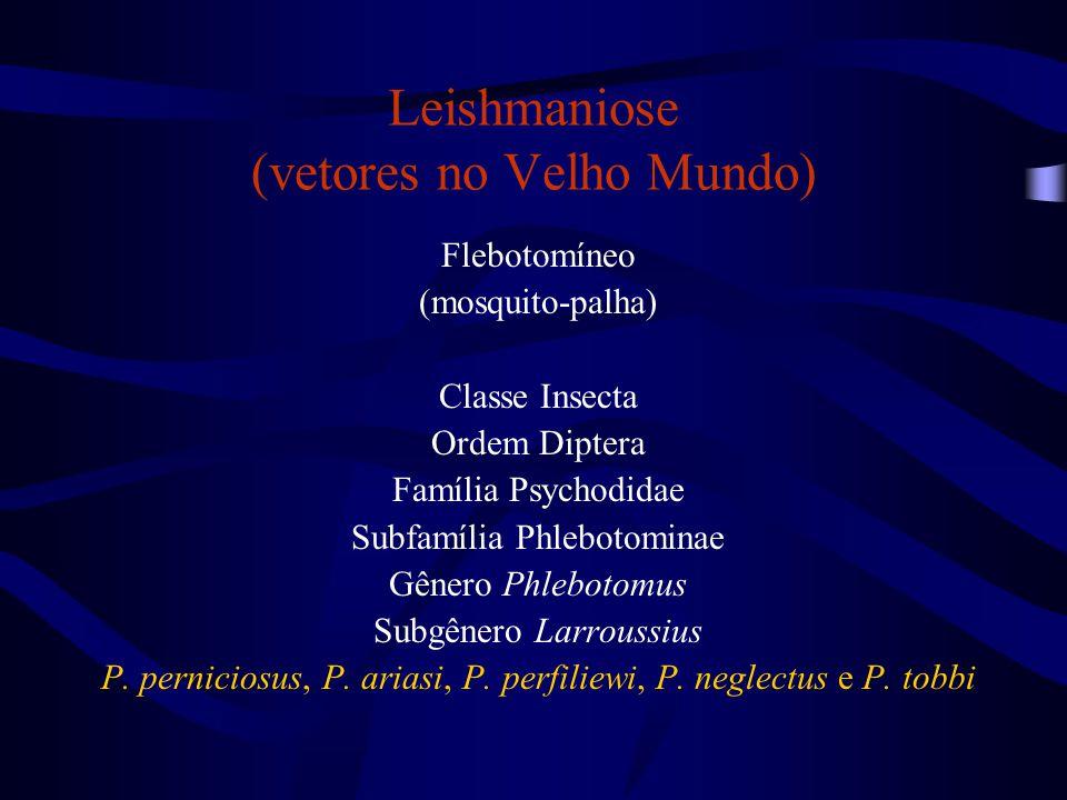 Leishmaniose (vetores no Velho Mundo)
