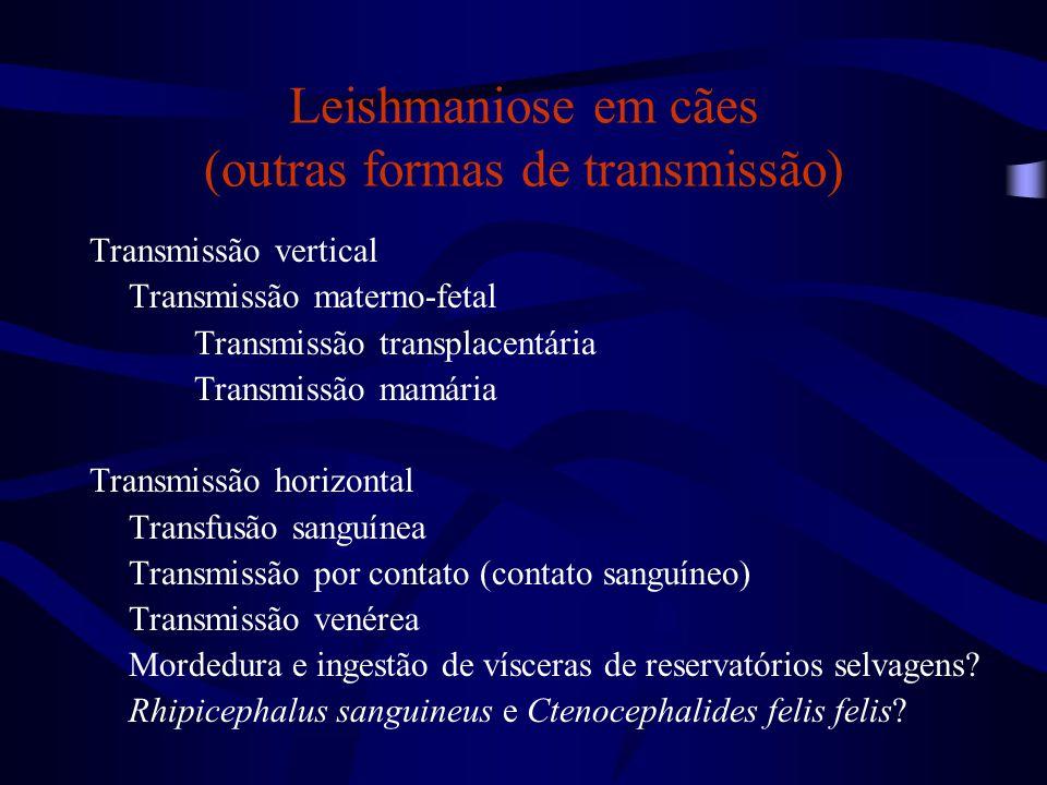 Leishmaniose em cães (outras formas de transmissão)
