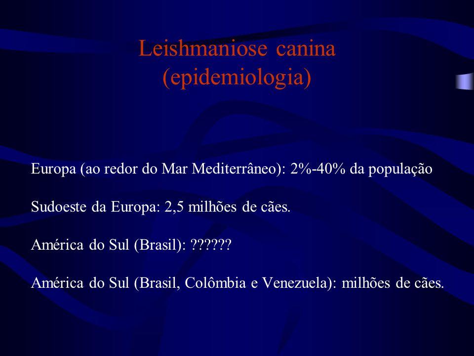 Leishmaniose canina (epidemiologia)
