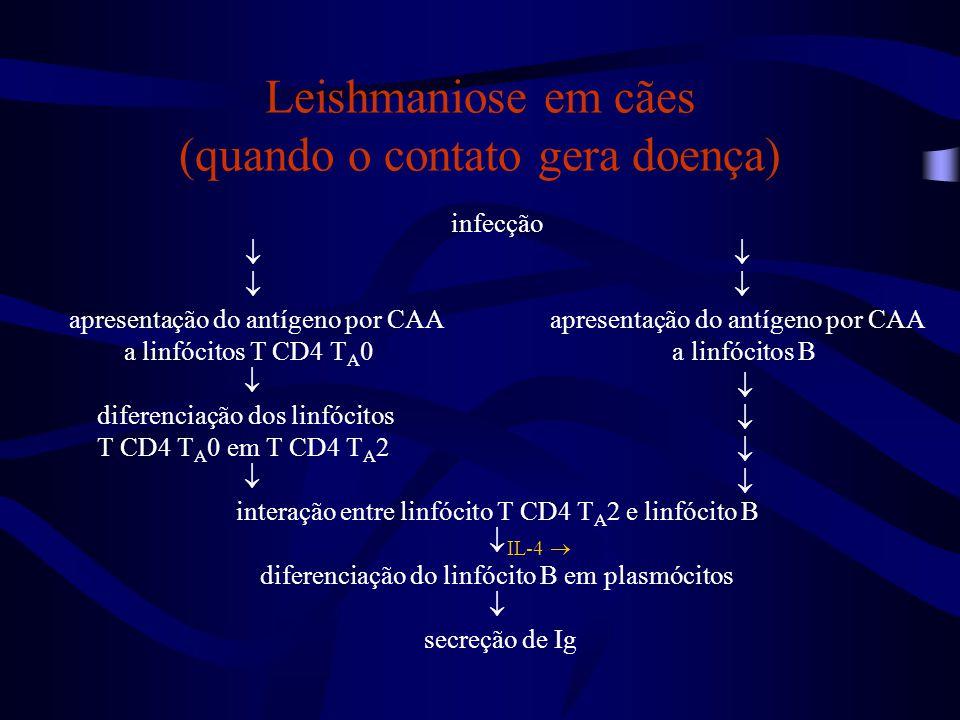 Leishmaniose em cães (quando o contato gera doença)