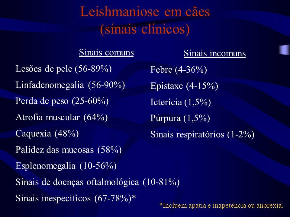 Leishmaniose em cães (sinais clínicos)