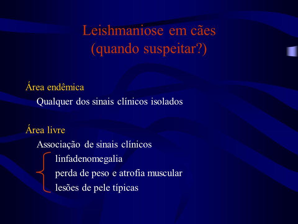 Leishmaniose em cães (quando suspeitar )