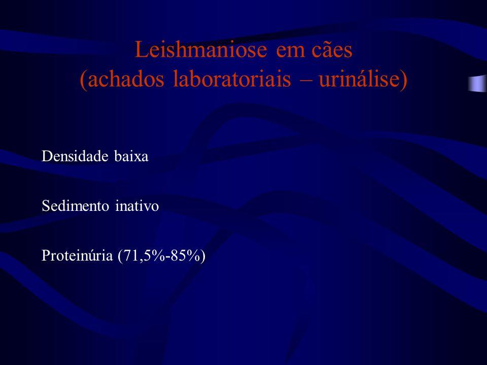 Leishmaniose em cães (achados laboratoriais – urinálise)
