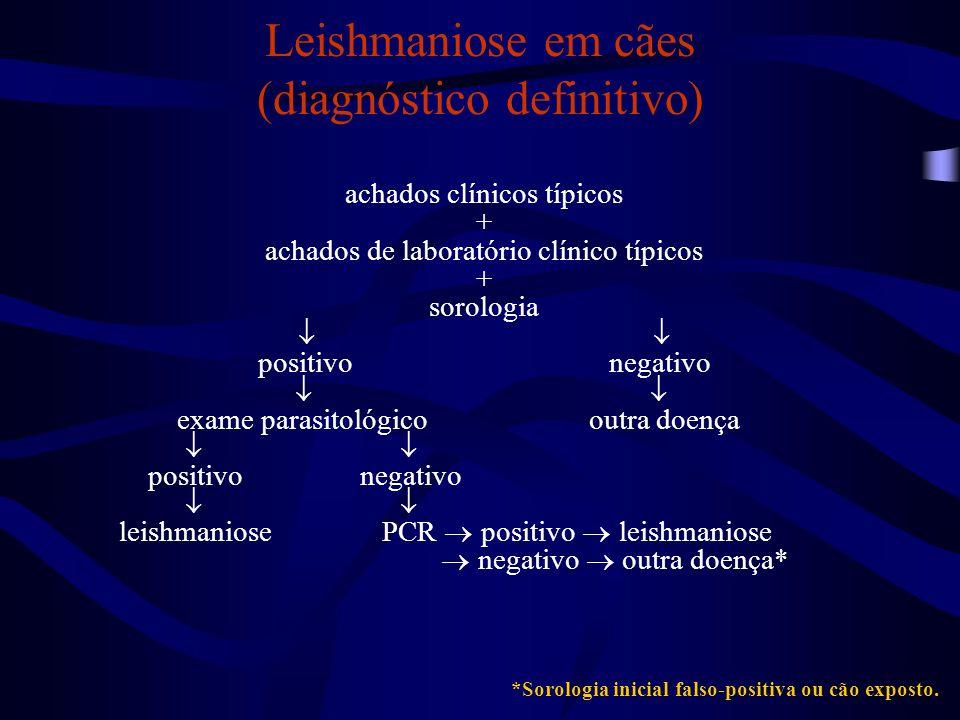 Leishmaniose em cães (diagnóstico definitivo)
