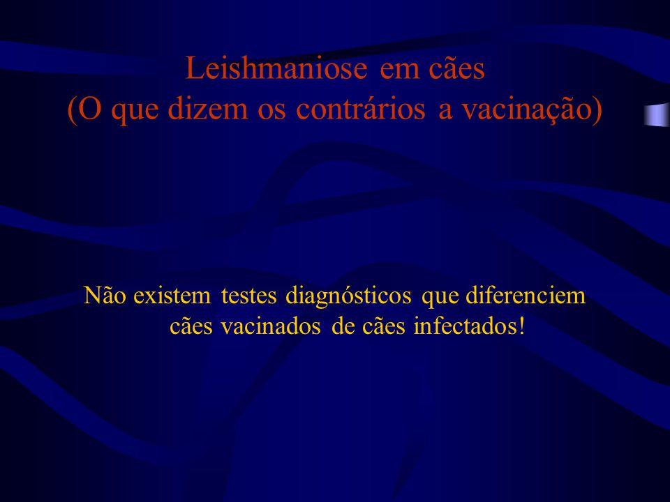 Leishmaniose em cães (O que dizem os contrários a vacinação)