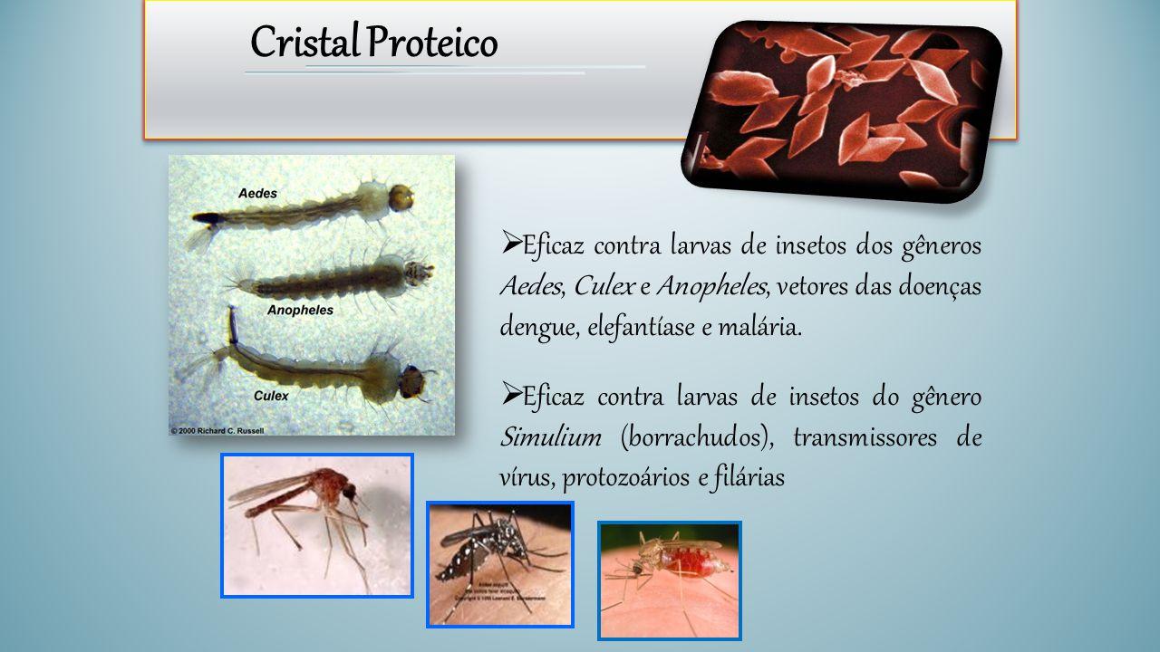 Cristal Proteico Eficaz contra larvas de insetos dos gêneros Aedes, Culex e Anopheles, vetores das doenças dengue, elefantíase e malária.