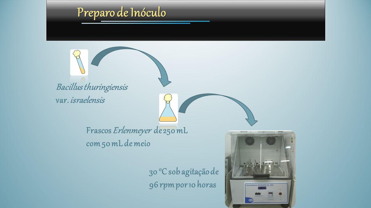 Preparo de Inóculo Bacillus thuringiensis var. israelensis
