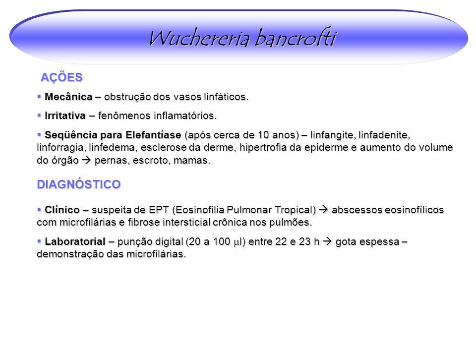 Wuchereria bancrofti AÇÕES DIAGNÓSTICO