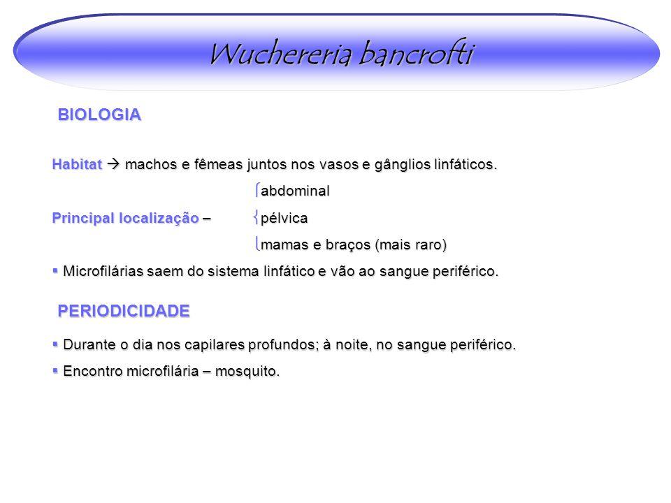 Wuchereria bancrofti BIOLOGIA PERIODICIDADE